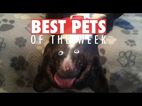 Best Pets of the Week | February 2018 Week 3