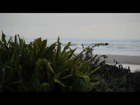Ocean Village Club Vacation Rentals - St. Augustine Beach, Florida