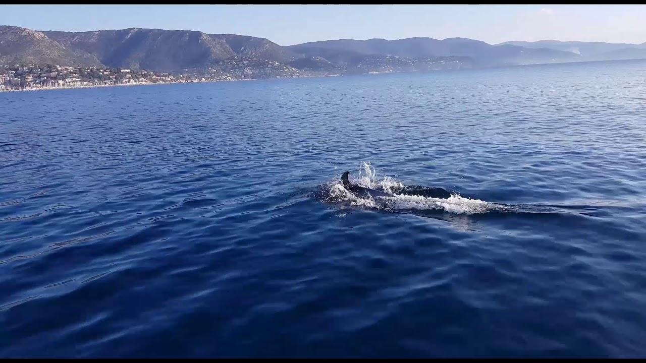 SunWave S2 à la rencontre des dauphins