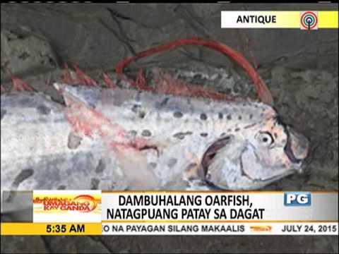 TINGNAN: Dambuhalang oarfish natagpuan sa Antique