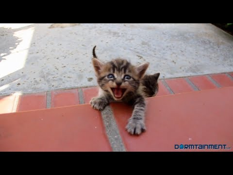 Cat Chat - @Dormtainment from YouTube · Duration:  2 minutes 45 seconds