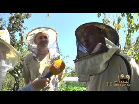 Те победиха: Пчеларството