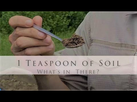 1 Teaspoon of Soil: What's in there?!
