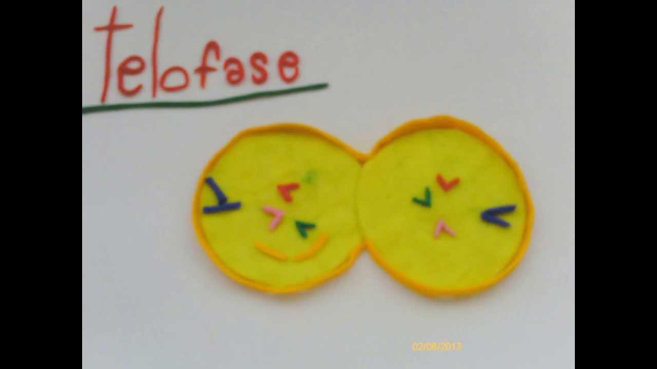 mitosis animacion plastilina