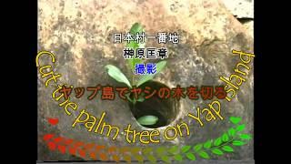 日本村一番地 榊原匡章 撮影 『ヤップ島でヤシの木を切る』 ヤップ島 検索動画 21