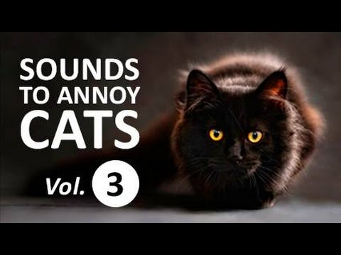 10 SOUNDS TO ANNOY CATS | Make your Cat Go Crazy! HD Vol. 3