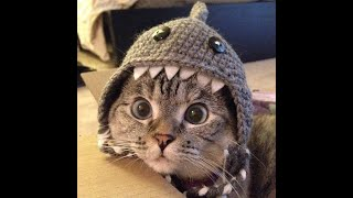 FUNNY ANIMALS 2020 😺🐶 Best Fun 2020 Cats Dogs Funny Cats Funny Animals