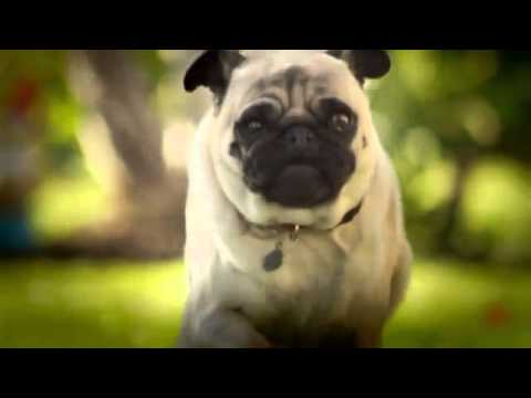 """dorritos pug attack advertisement So which commercials and brands were people talking about most during the  game doritos, whose """"pug attack"""" commercial was a popular."""