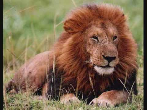The Carnival Of The Animals: Royal March Of The Lion - YouTube