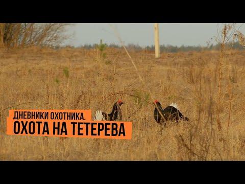 Дневники охотника. Охота на тетерева