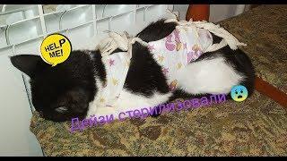 Стерилизация кошки   Дейзи после стерилизовки   Как себя чувствует?   Что с ней?