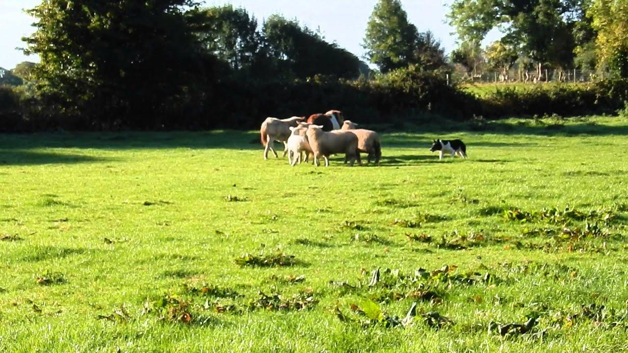 sheep ranch latino personals Sheep ranch tourism: tripadvisor has reviews of sheep ranch hotels,  attractions, and restaurants making it your best sheep ranch resource.