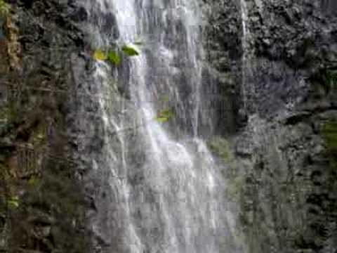 Manoa Falls Swim