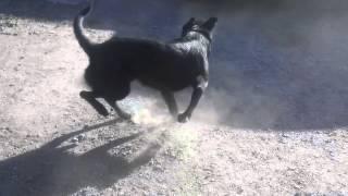 Собака бегает за хвостом под аплодисменты