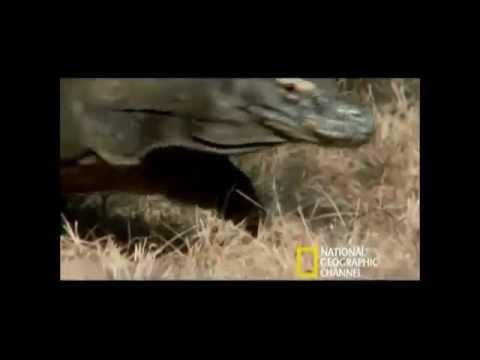 Wonderful Fauna of Indonesia (Hewan Asli Indonesia)