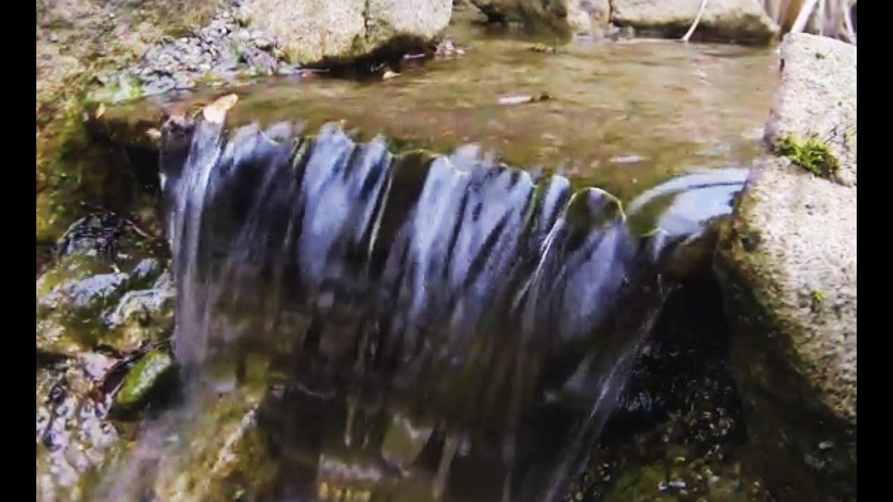 Teichpumpen ⇒ So finden Sie die richtige Teichpumpe