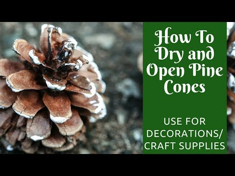 Christmas Crafts: How to Dry and Open Pine Cones