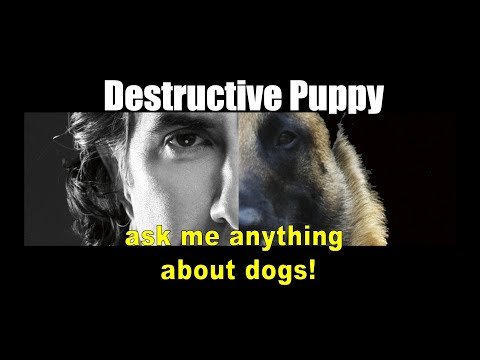 My Puppy is Scratching Walls and Biting - ask me anything - Dog Training Video