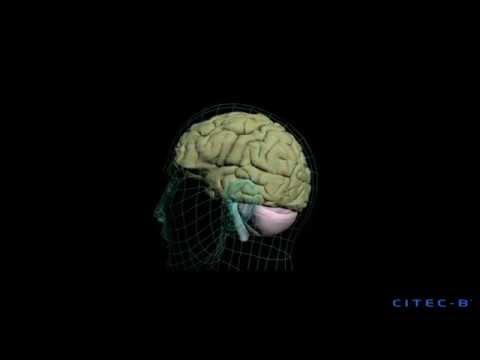 La depresión mayor (2) - Etiología