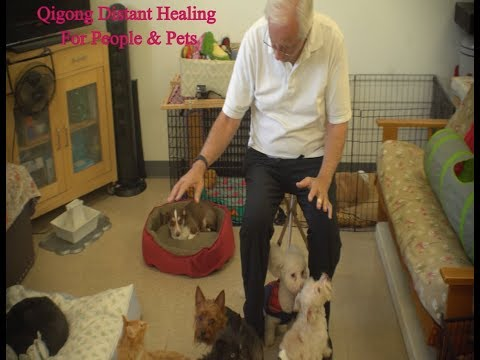 Energy Healing for People, Dogs, Cats, Horses - Global