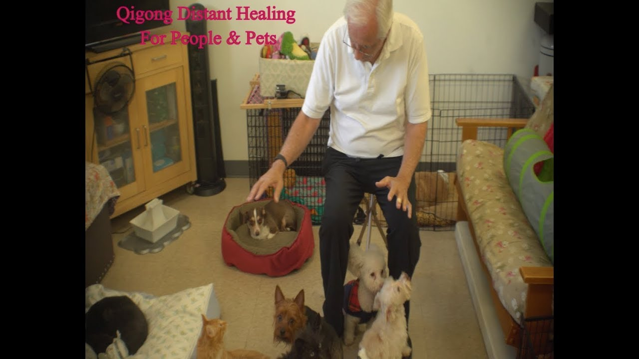 Powerful Alternative Healing for Dogs, Cats, Horses, People - Global Qigong Distant Energy Healing