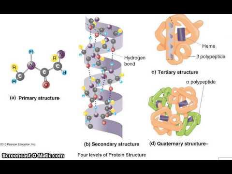 proteinstruktur youtube. Black Bedroom Furniture Sets. Home Design Ideas