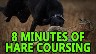 Hare Coursing (8minutes) | Working Lurcher