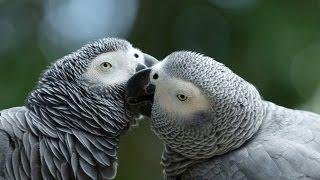 Экзотические попугаи. Содержание и обучение командам