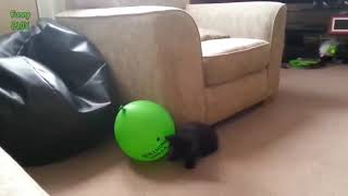 Funny Cats vs Balloons Compilation