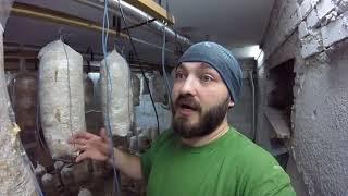 видео Системы туманообразования для грибных хозяйств