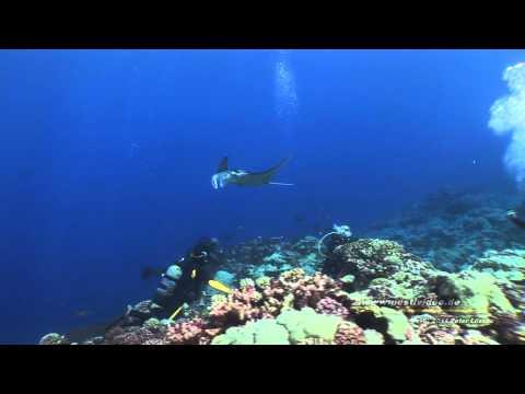 """""""Raroia Atoll -  Manta Reef""""  Französisch Polynesien- Tuamotus AquaTiki Reisebericht Tauchen"""