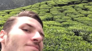 Kerala tea plantations
