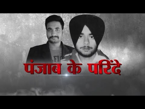Ground Report - पंजाब के परिंदे | Punjab ke Parinde