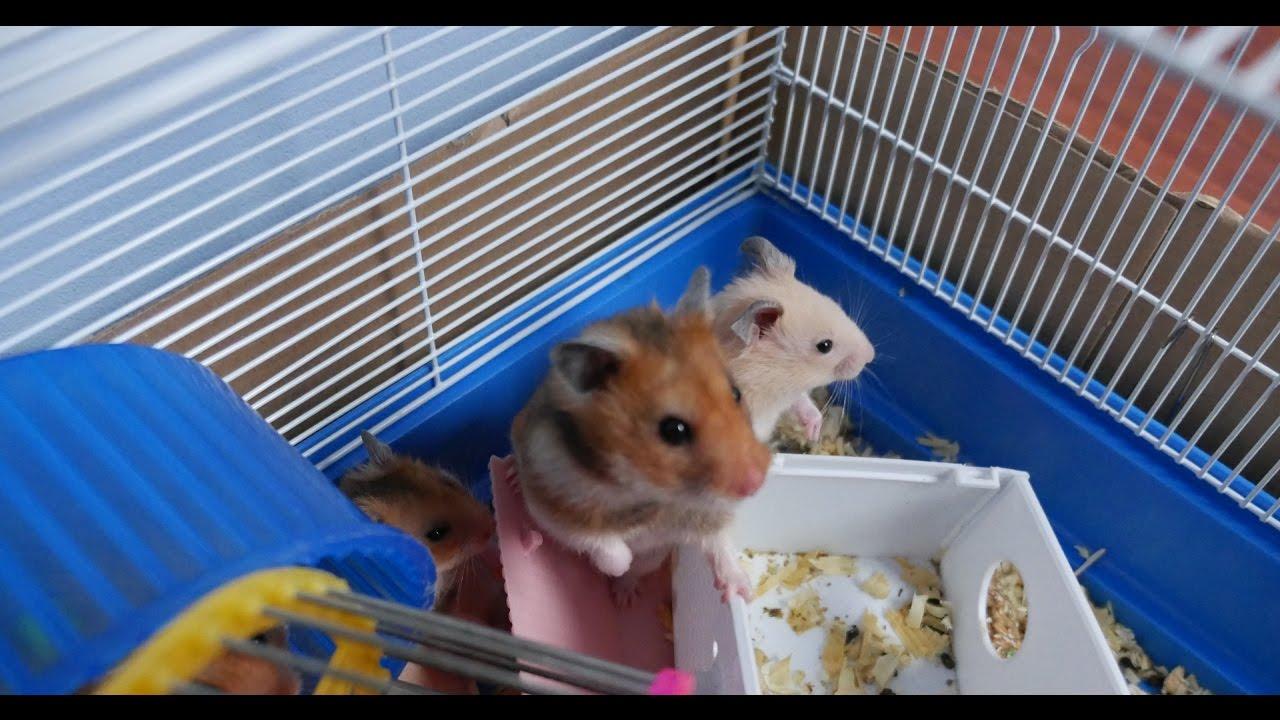 Super hamster супер хомяк игровой автомат леонбетс скачки онлайн