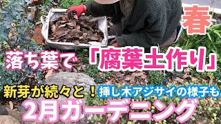 【2月ガーデニング】落ち葉で腐葉土作り / 春庭の紹介 / 新芽続々なので株周りをお手入れ