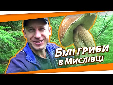 Карпатські гриби (Мислівка).