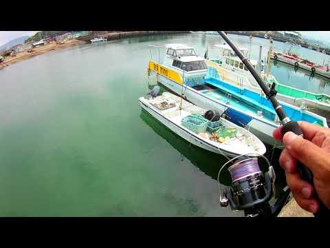 投げ釣りで釣れたハゼに寄ってきたソーダカツオ【田辺湊浦漁港】