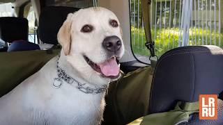 Автогамак для перевозки собак