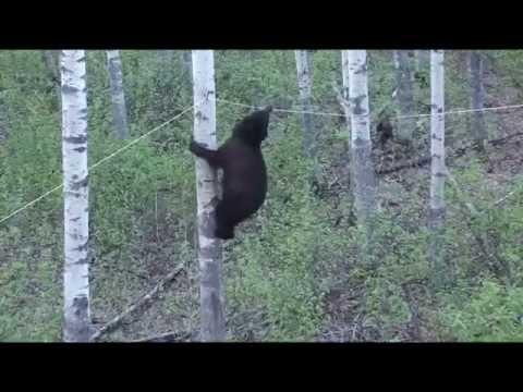 Анекдоты про медведя
