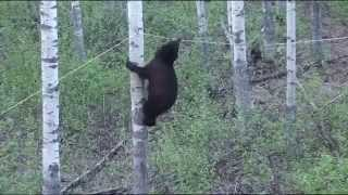 Угарный прикол с медведем