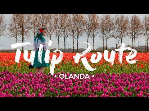 La STRADA DEI TULIPANI! 🌷🌷🌷 Olanda in fiore - guida di viaggio [ENG subs]