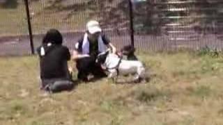 金城ふ頭のゆかいな仲間たち.