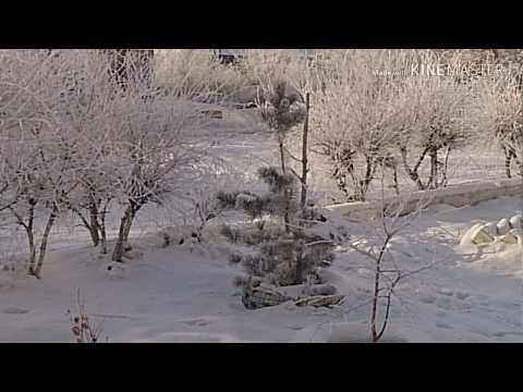 Стихи о зиме. И лес уснул в холодной тишине...