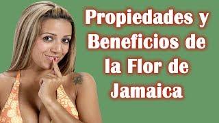 Propiedades Y Beneficios De La Flor De Jamaica