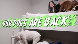 Our Dogs Are Back (WK 410.2) | Bratayley