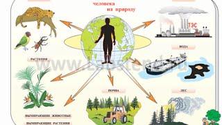 Влияние человека на  природу(Знаменитый писатель Валентин Распутин считает, что самым громким словом, даже громче войны и стихии, стало..., 2015-01-05T12:14:22.000Z)