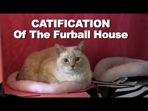 Catification of The Furball Cats Home - ep1 #Catify