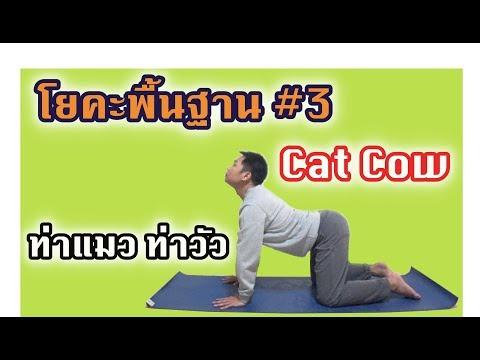 Cat Cow   ท่าแมว ท่าวัว   ฝึกโยคะพื้นฐาน   Warmup & Cool down Pose #3