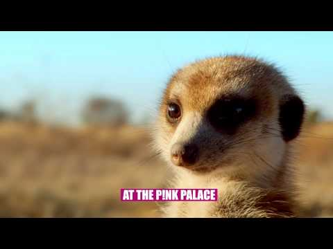 Meerkats 3D Coming to the Pink Palace