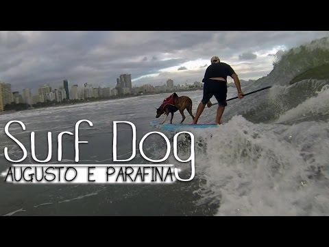 Surf Dog - Augusto e Parafina - Surfing Trip #3